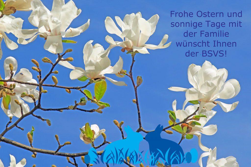 """Blauer Himmel, Zweige mit weiße Blüten eines Magnolienbaumes und vereinzelt befinden sich grüne kleine Blätter an den Zweigen. In der rechten oberen Ecke stehen folgende Ostergrüße: """"Frohe Ostern und sonnige Tage mit der Familie wünscht Ihnen der BSVS!"""". Mittig am unteren Bildrand sitzen zwei Osterhasen (hell und dunkelblau) im blauen Gras zwischen blauen Ostereiern."""